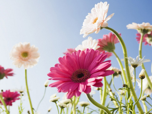 Blue Sky and Flowers Wallpapers.